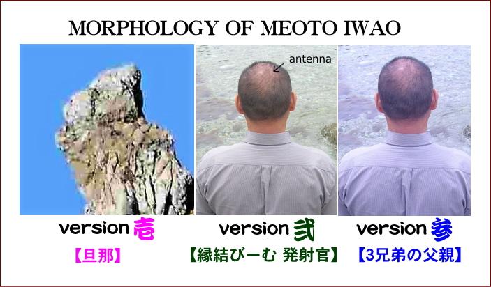 芽音岩生の形態について